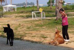 Mata inte hundarna