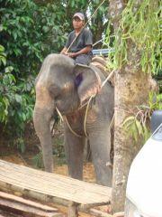 Elefant trekking, Khao SOk