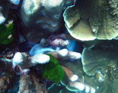 en till bläckfisk