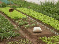 Grönsaksodling på flodbädden