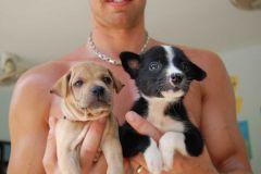 Dog Rescue Center Samui