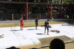 Krokodil Show