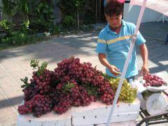 Vindruvsförsäljare i Kata
