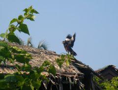 Fågel på bungalowtak