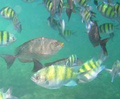 Snorkling i Krabi